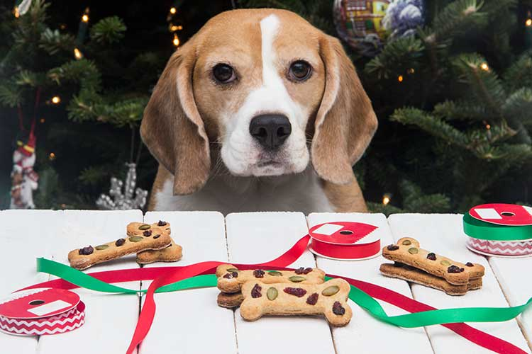 Calvins-Christmas-Cookie-Dog-Treats